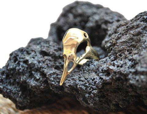anillo cráneo ave